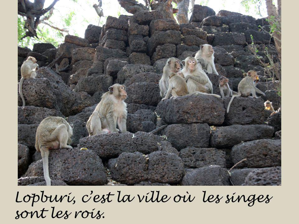 Lopburi, c'est la ville où les singes sont les rois.