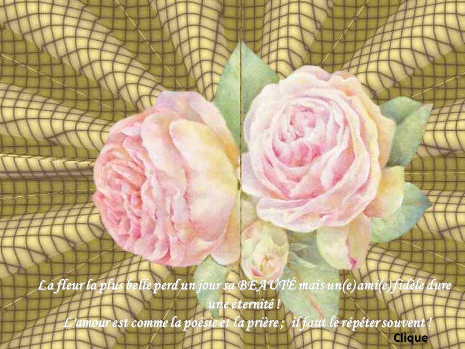 La fleur la plus belle perd un jour sa BEAUTÉ mais un(e) ami(e) fidèle dure une éternité !
