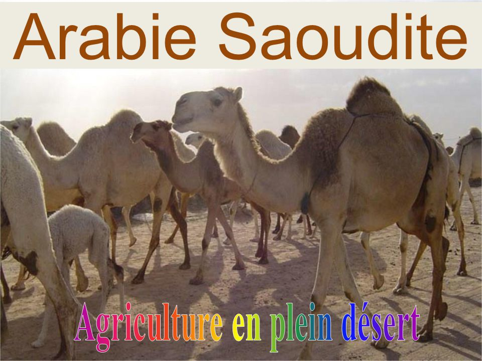 Agriculture en plein désert