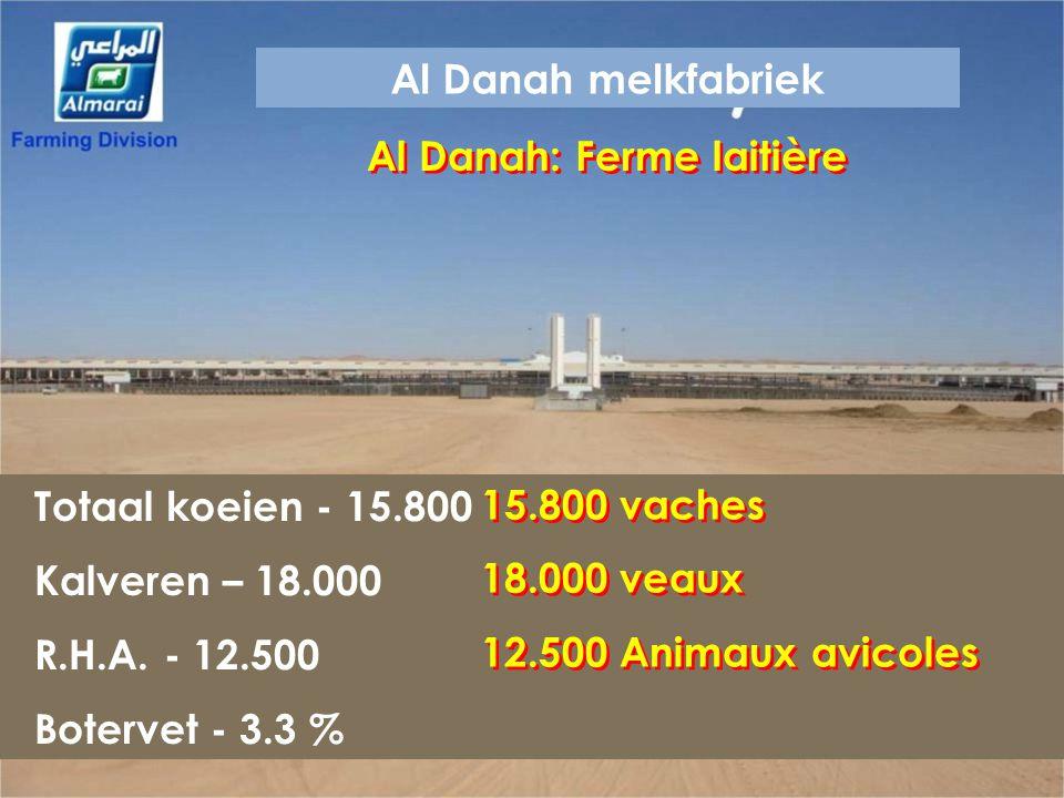 Al Danah: Ferme laitière