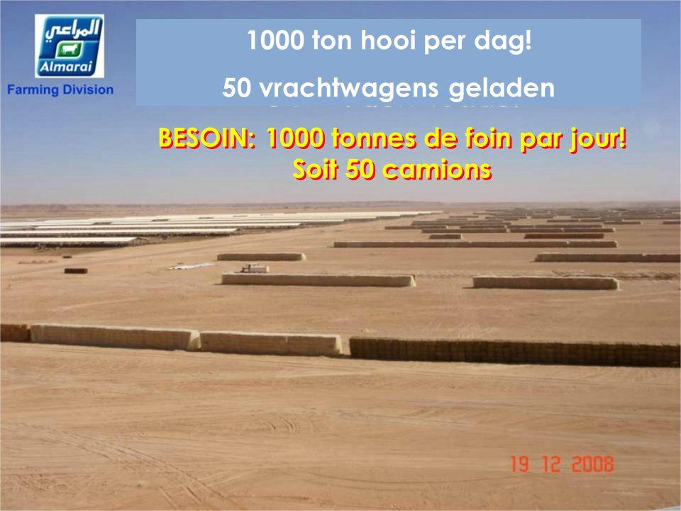 BESOIN: 1000 tonnes de foin par jour! Soit 50 camions