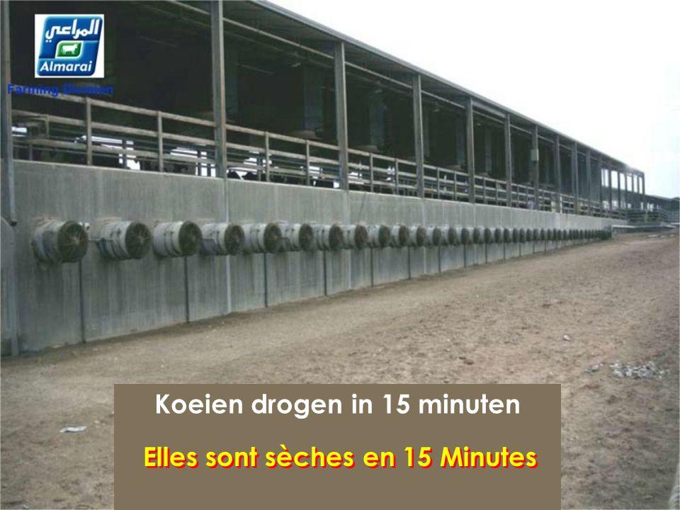Koeien drogen in 15 minuten Elles sont sèches en 15 Minutes
