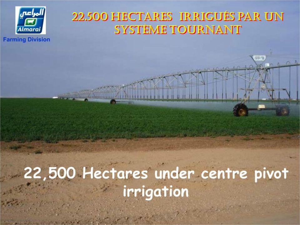 22.500 hectares irrigués par un système tournant