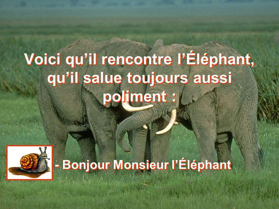 - Bonjour Monsieur l'Éléphant