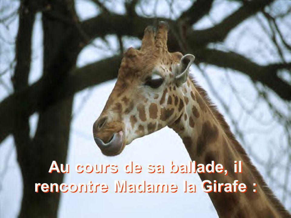 Au cours de sa ballade, il rencontre Madame la Girafe :