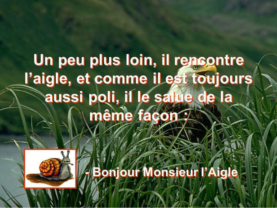 - Bonjour Monsieur l'Aigle