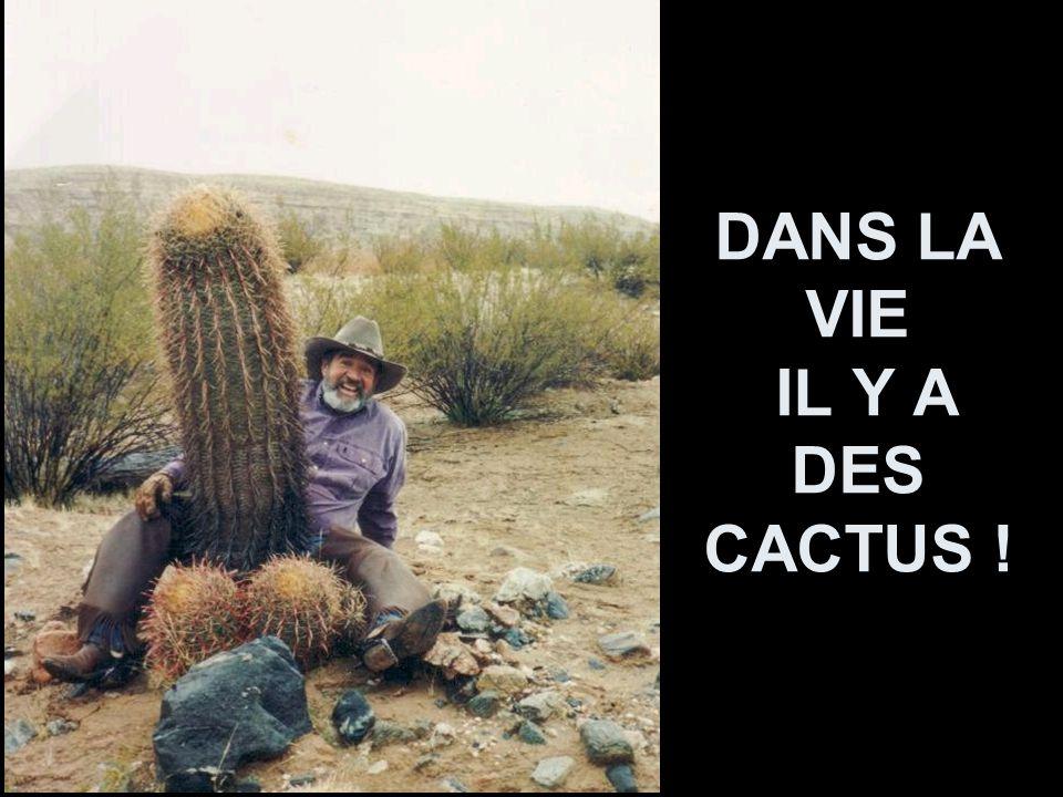 DANS LA VIE IL Y A DES CACTUS !
