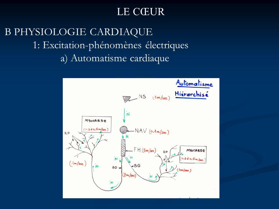 LE CŒUR B PHYSIOLOGIE CARDIAQUE 1: Excitation-phénomènes électriques a) Automatisme cardiaque