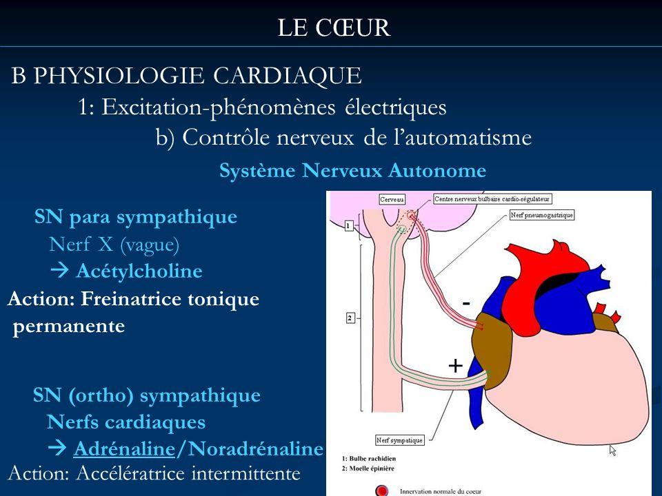 B PHYSIOLOGIE CARDIAQUE 1: Excitation-phénomènes électriques