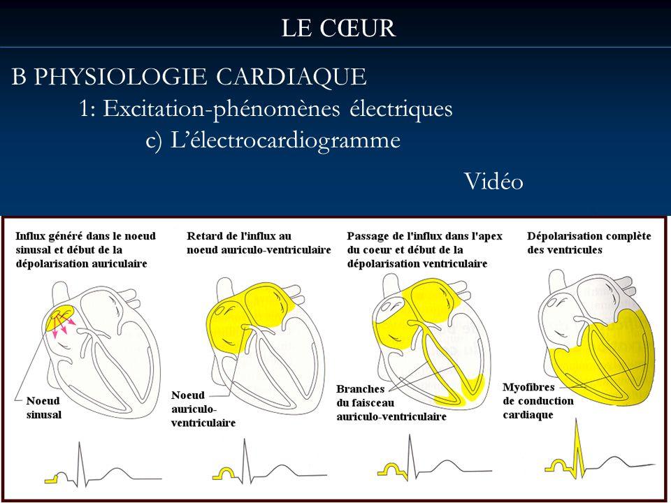 LE CŒUR B PHYSIOLOGIE CARDIAQUE 1: Excitation-phénomènes électriques c) L'électrocardiogramme Vidéo