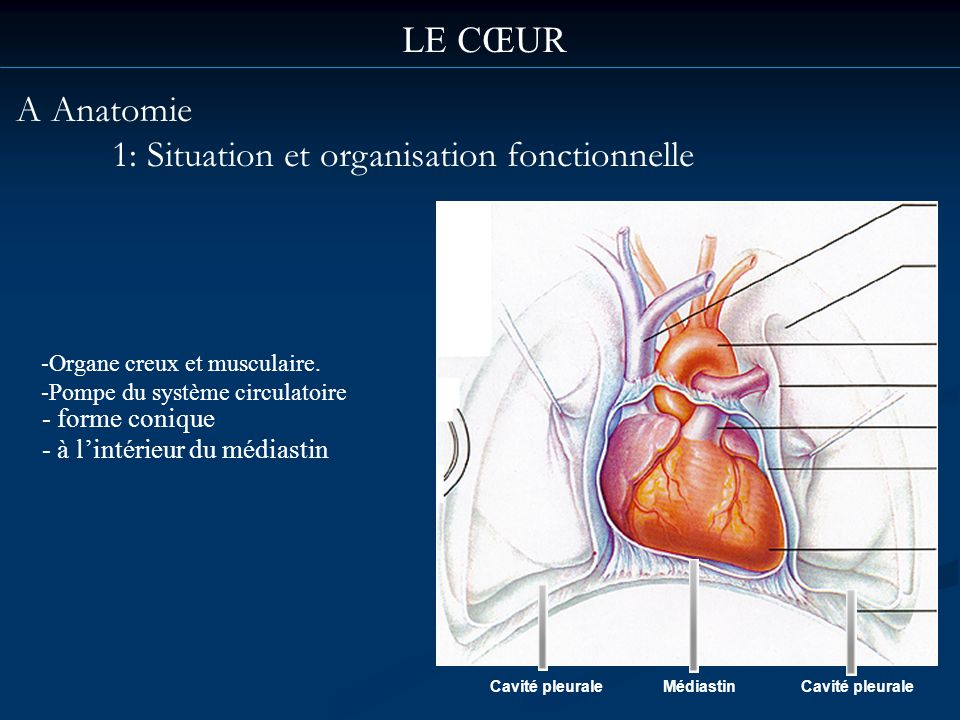 1: Situation et organisation fonctionnelle