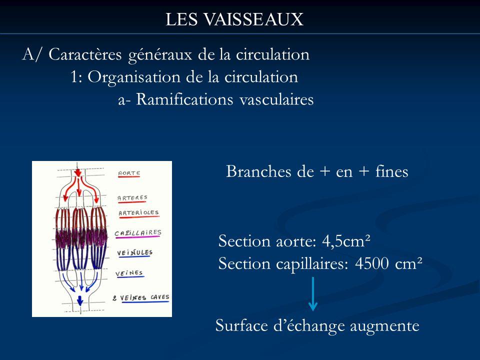 LES VAISSEAUX A/ Caractères généraux de la circulation. 1: Organisation de la circulation. a- Ramifications vasculaires.