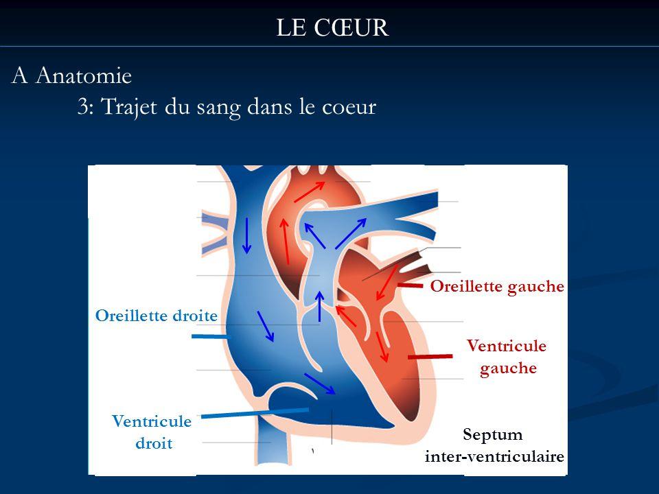 3: Trajet du sang dans le coeur