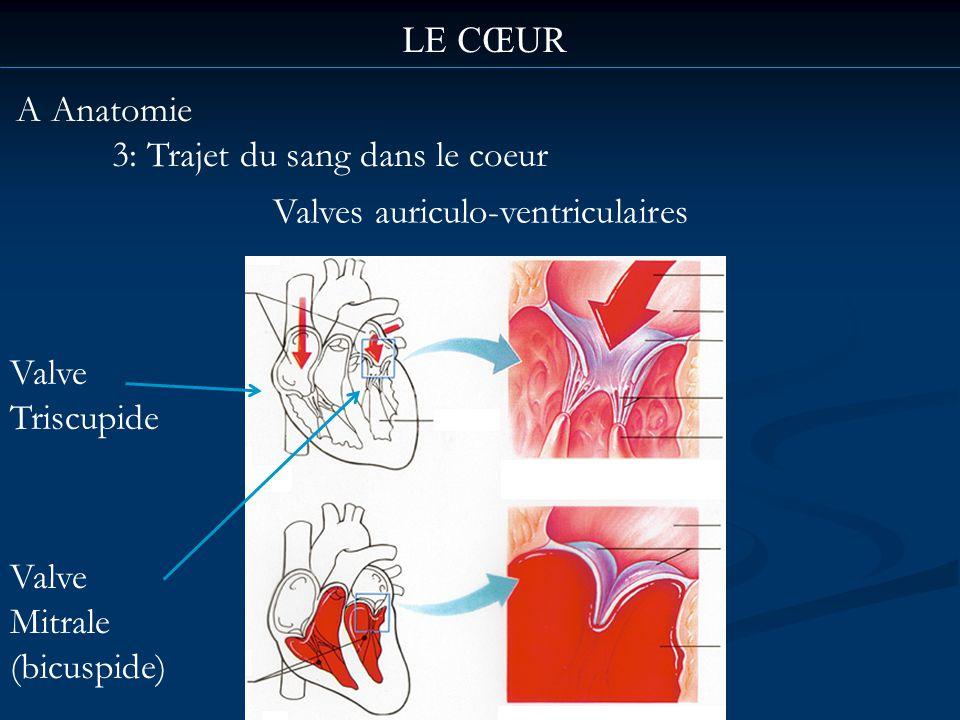 LE CŒUR A Anatomie. 3: Trajet du sang dans le coeur. Valves auriculo-ventriculaires. Valve. Triscupide.