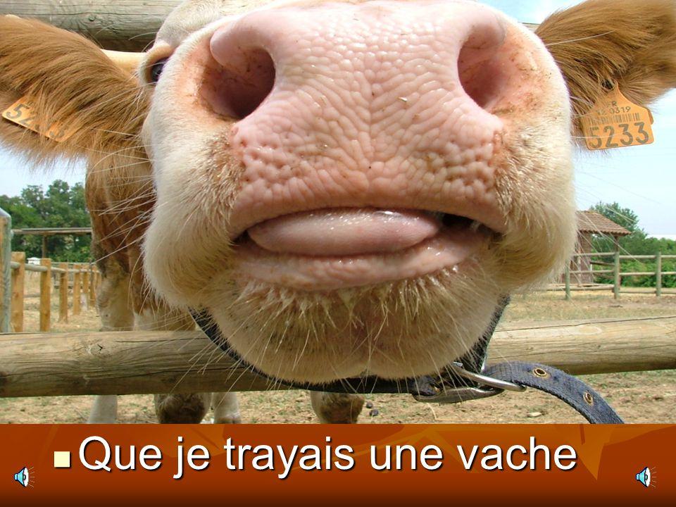 Que je trayais une vache
