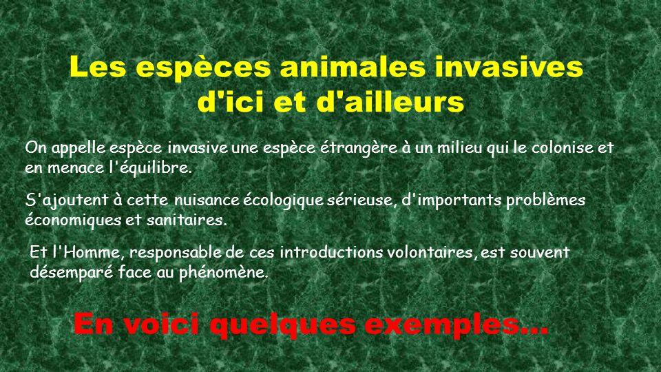 Les espèces animales invasives