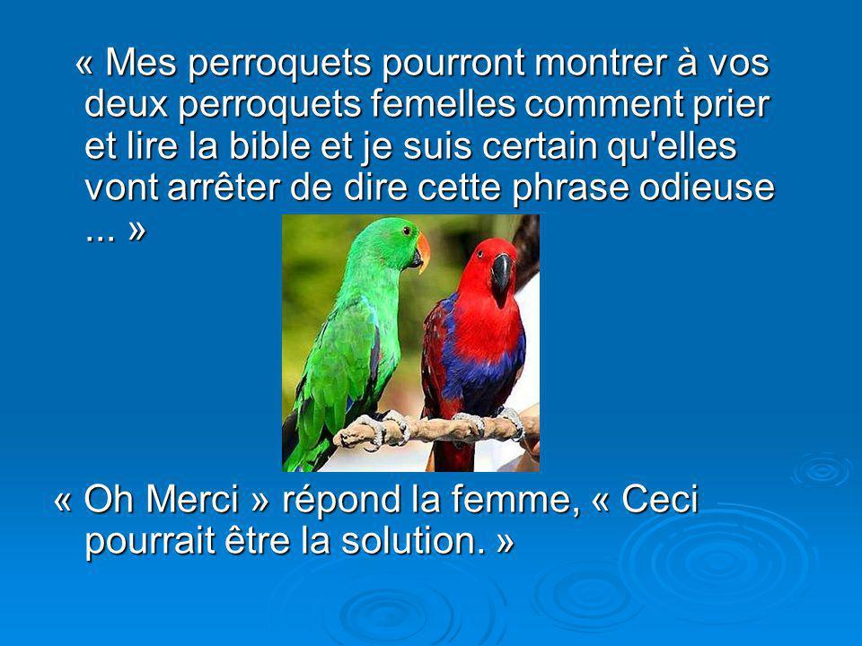 « Mes perroquets pourront montrer à vos deux perroquets femelles comment prier et lire la bible et je suis certain qu elles vont arrêter de dire cette phrase odieuse ... »