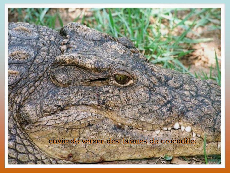envie de verser des larmes de crocodile.