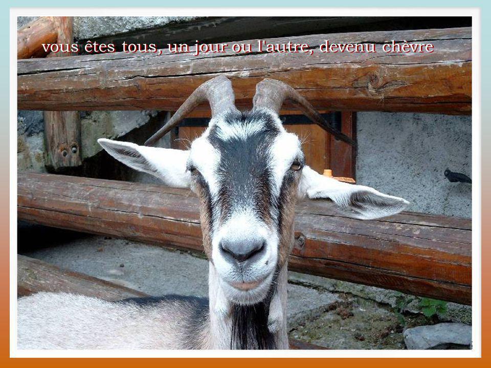 vous êtes tous, un jour ou l autre, devenu chèvre