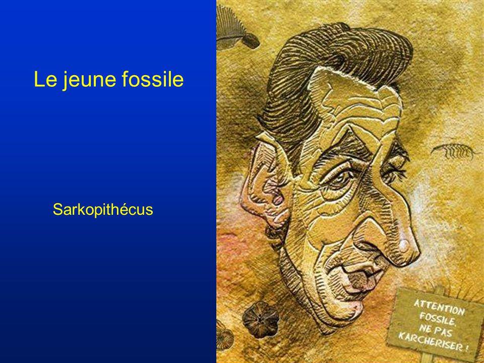 Le jeune fossile Sarkopithécus
