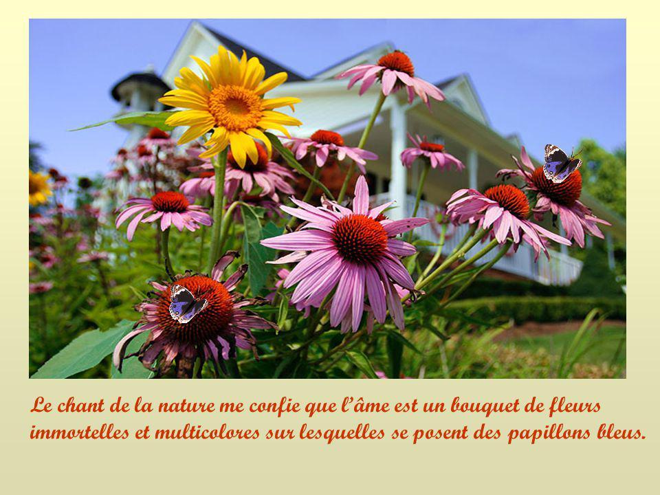 Le chant de la nature me confie que l'âme est un bouquet de fleurs immortelles et multicolores sur lesquelles se posent des papillons bleus.
