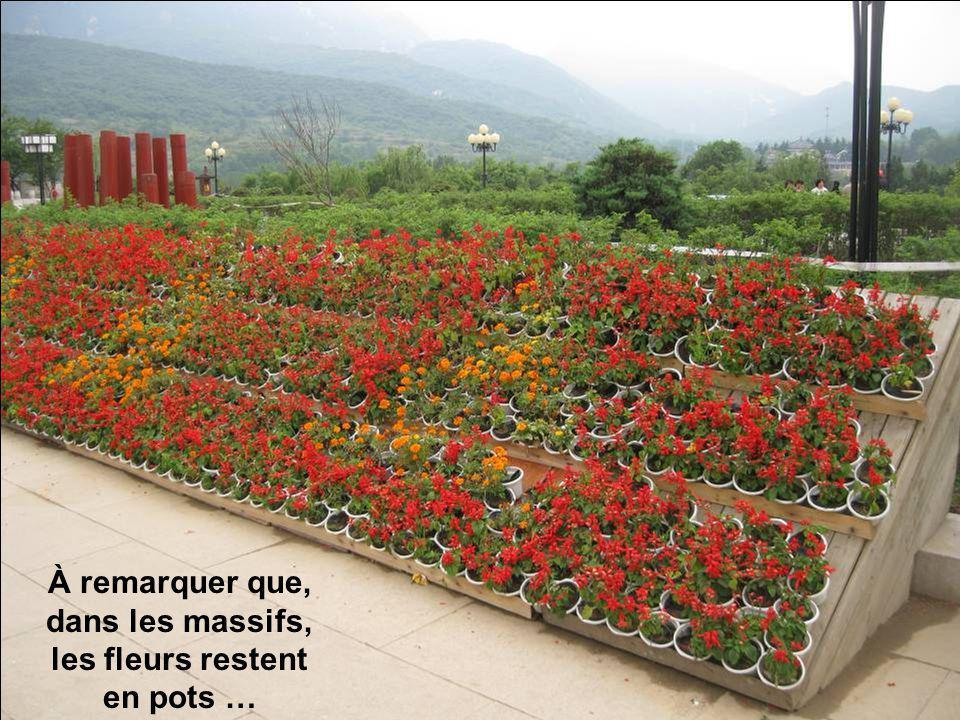 À remarquer que, dans les massifs, les fleurs restent en pots …