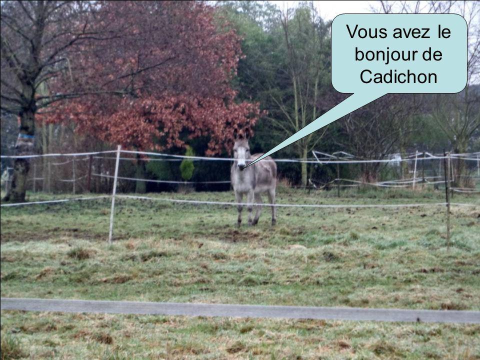 Vous avez le bonjour de Cadichon
