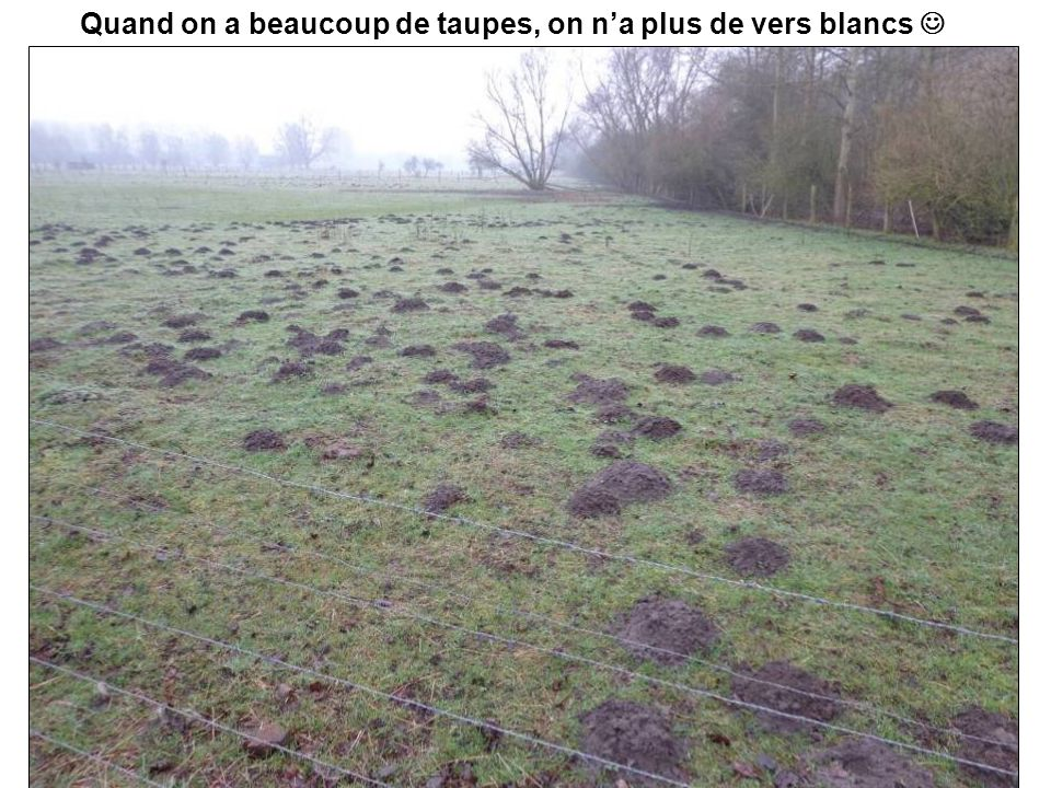 Quand on a beaucoup de taupes, on n'a plus de vers blancs 