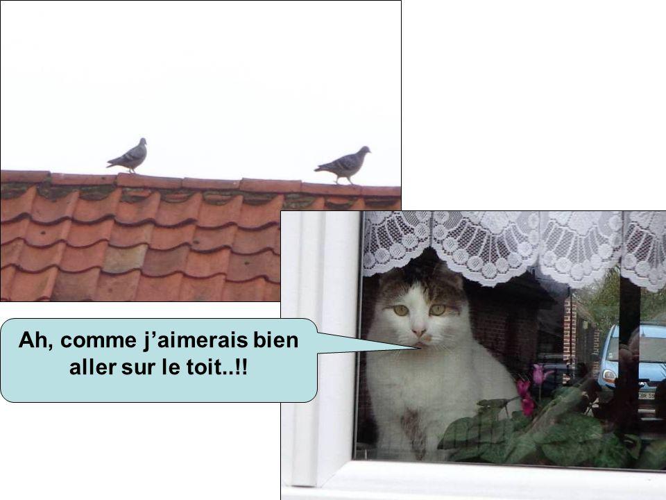Ah, comme j'aimerais bien aller sur le toit..!!