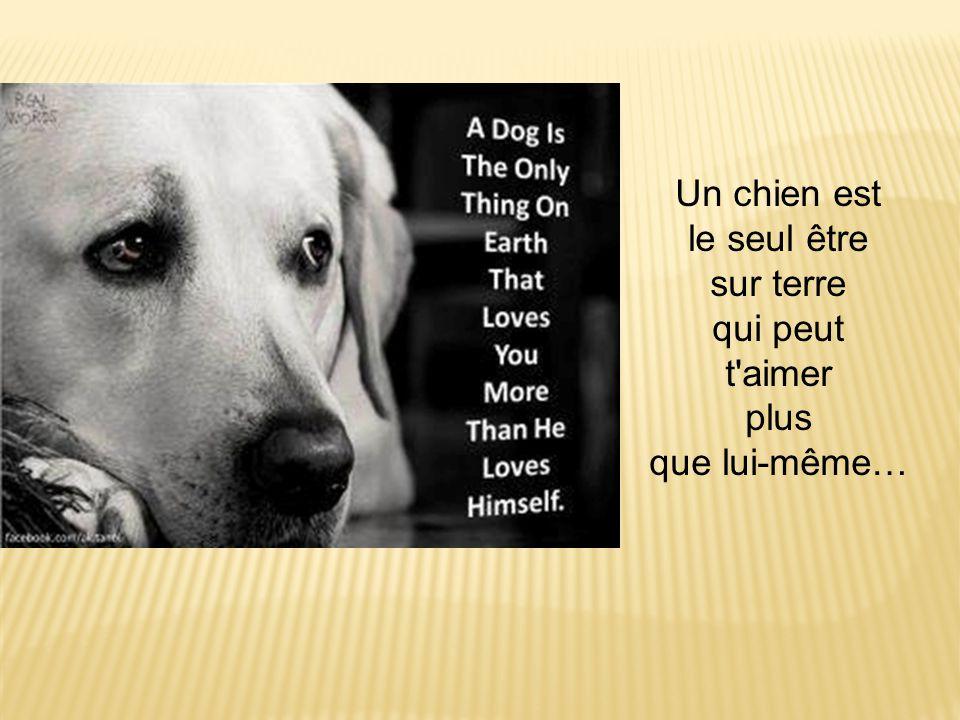 Un chien est le seul être sur terre qui peut t aimer plus que lui-même…