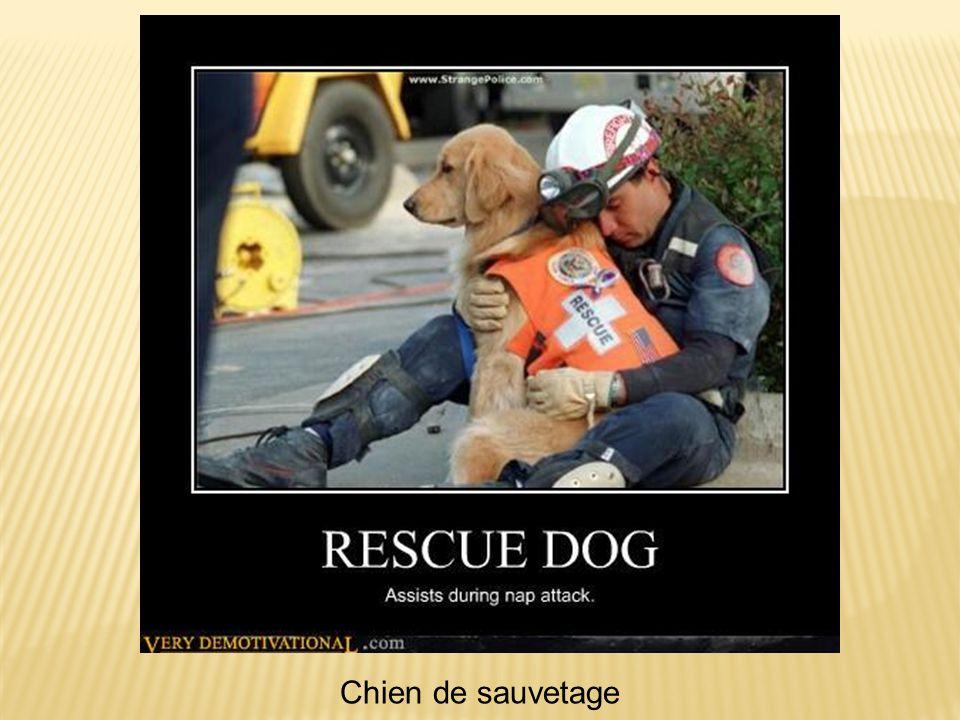 Chien de sauvetage