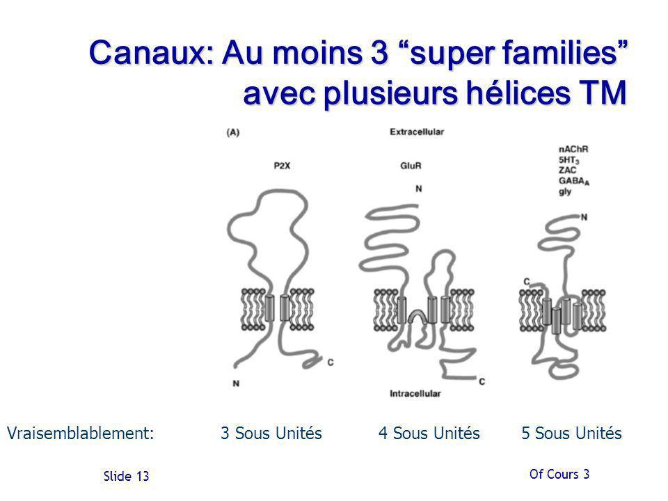 Canaux: Au moins 3 super families avec plusieurs hélices TM