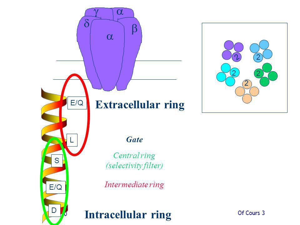 Extracellular ring Intracellular ring