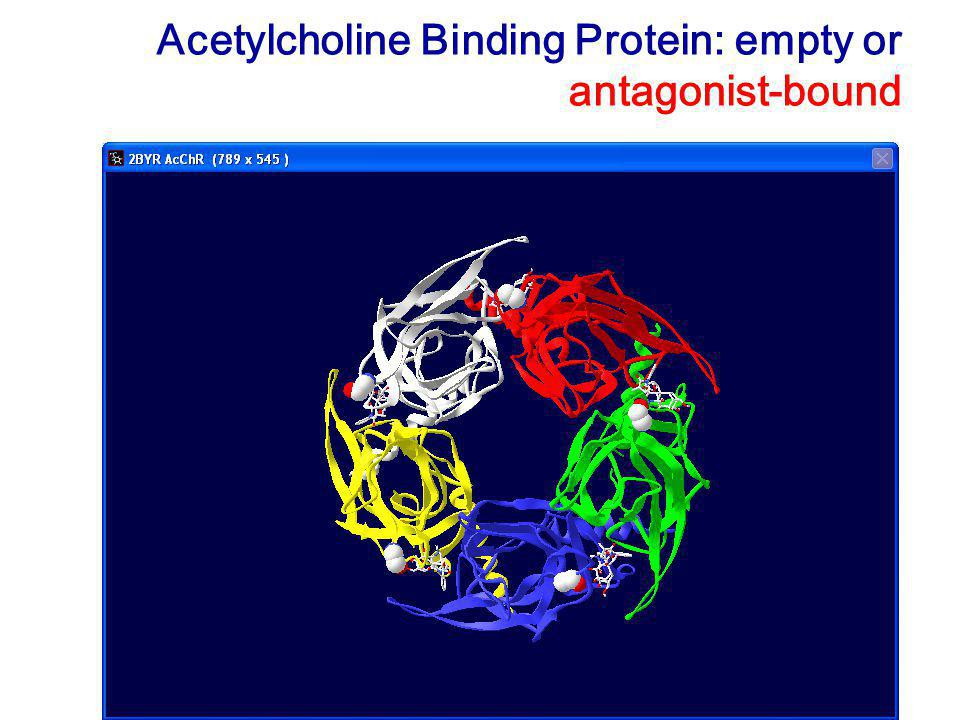 Acetylcholine Binding Protein: empty or antagonist-bound