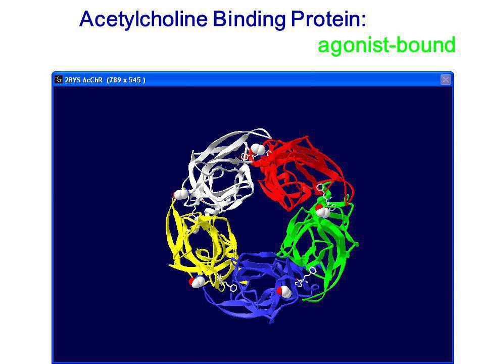 Acetylcholine Binding Protein: empty or agonist-bound
