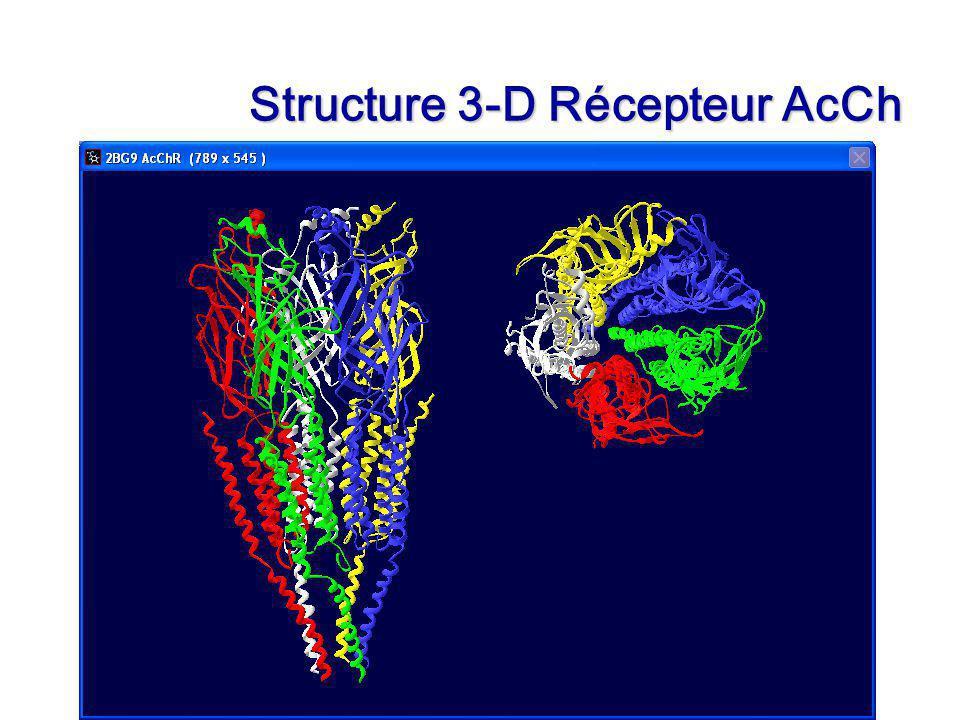 Structure 3-D Récepteur AcCh