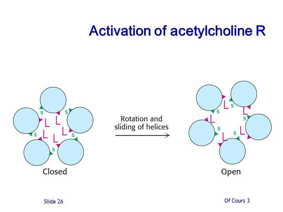 Activation of acetylcholine R