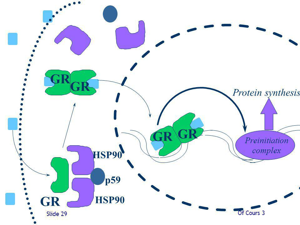 GR HSP90 p59 Protein synthesis Preinitiation complex Of Cours 3