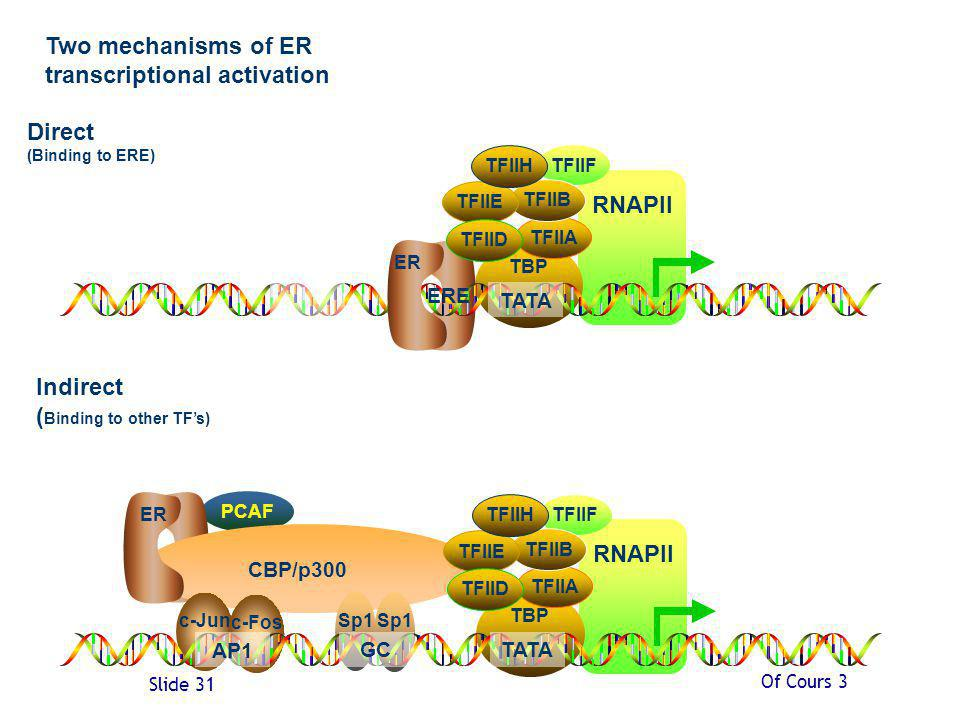 Two mechanisms of ER transcriptional activation