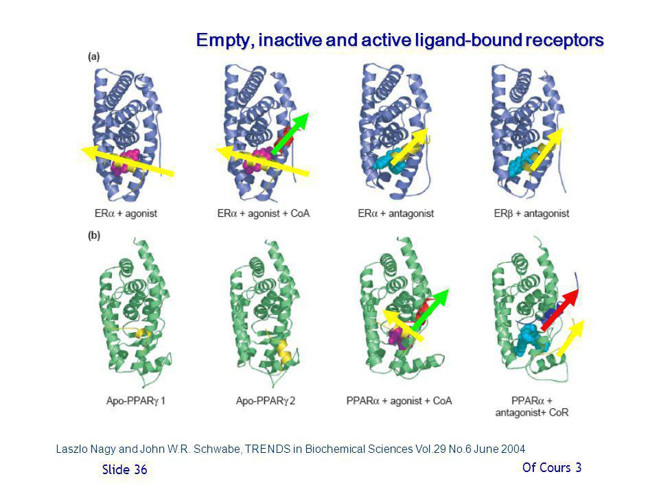 Empty, inactive and active ligand-bound receptors