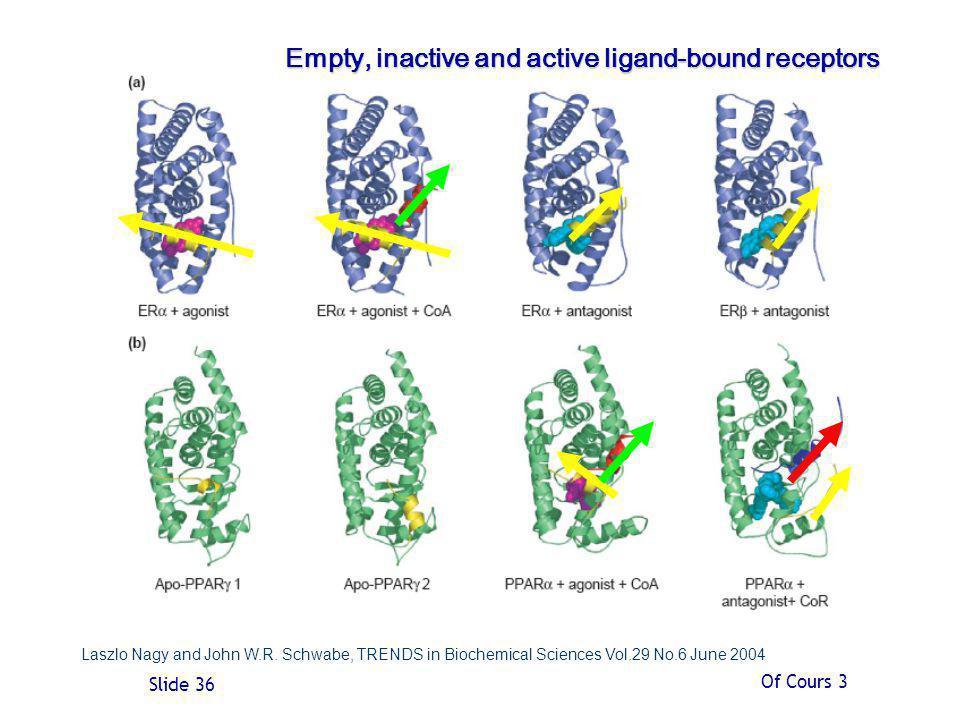 Empty, inactive and active ligand-bound receptors