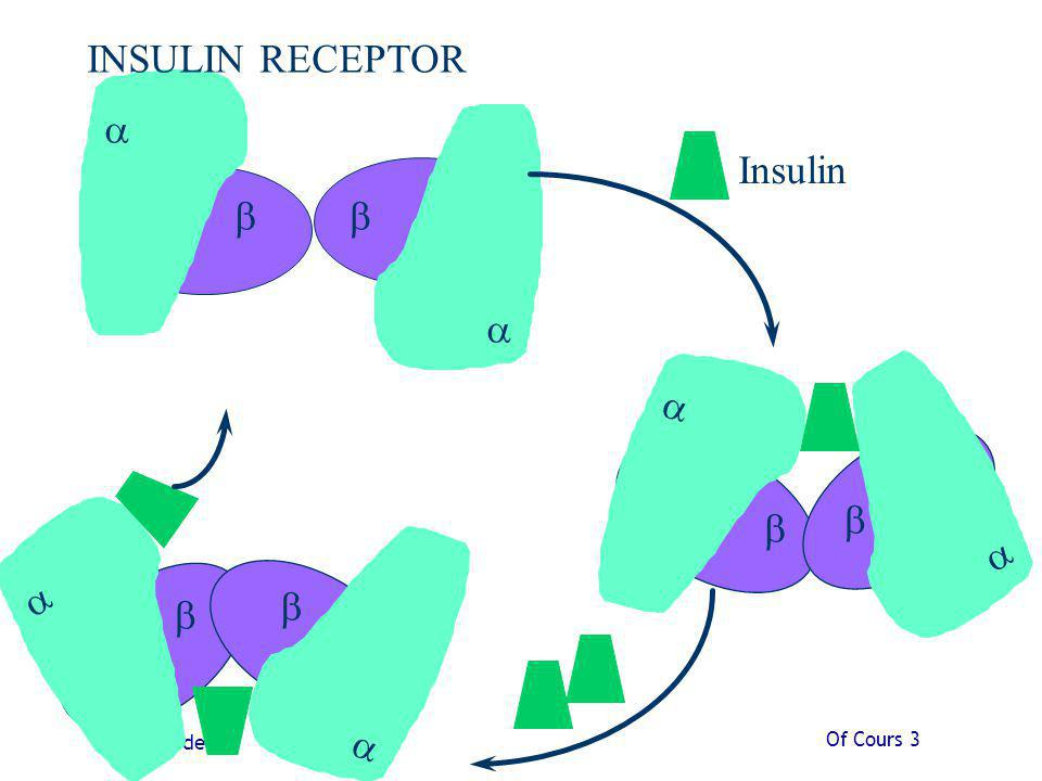b a Insulin INSULIN RECEPTOR Of Cours 3