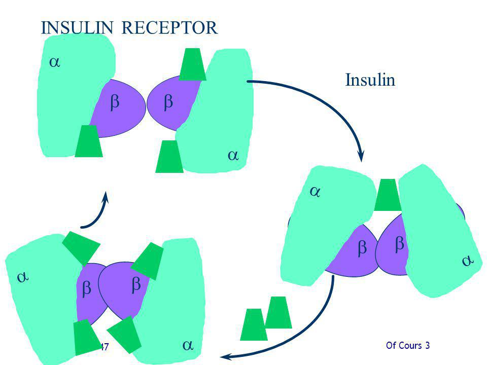 INSULIN RECEPTOR a a Insulin b b a a b a b a b b Of Cours 3