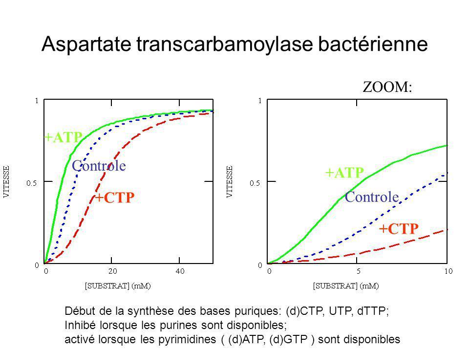 Aspartate transcarbamoylase bactérienne