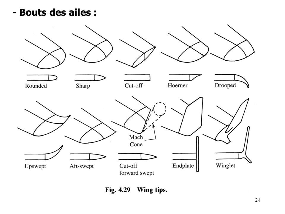 - Bouts des ailes :