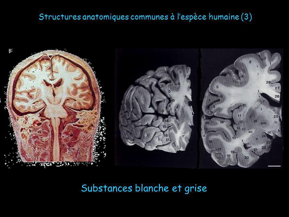 Substances blanche et grise