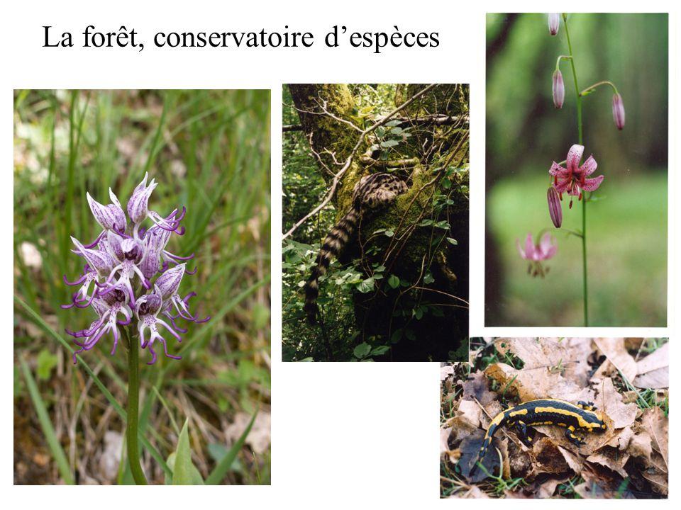La forêt, conservatoire d'espèces