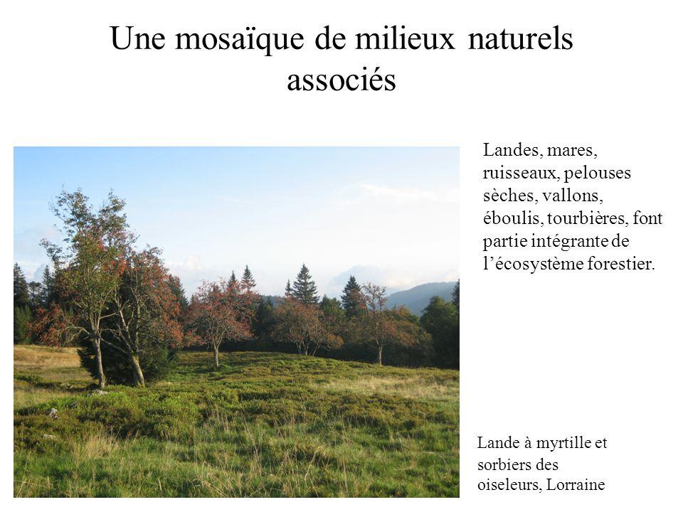 Une mosaïque de milieux naturels associés