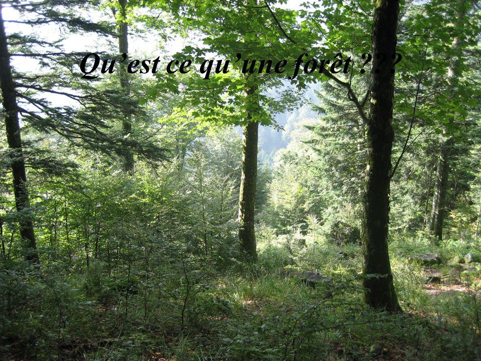 Qu'est ce qu'une forêt