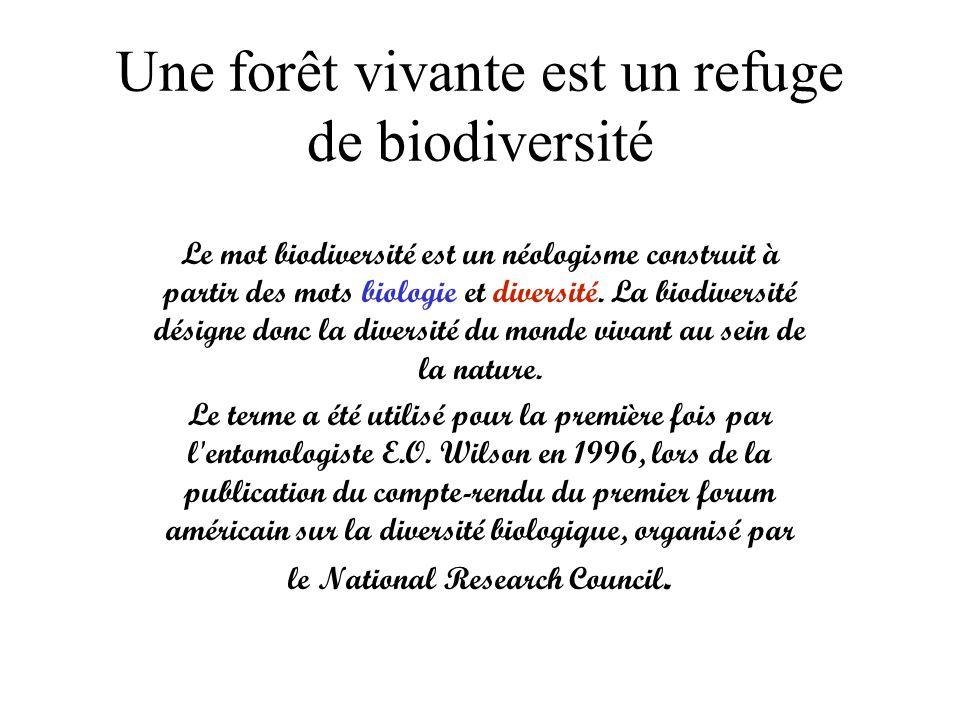 Une forêt vivante est un refuge de biodiversité